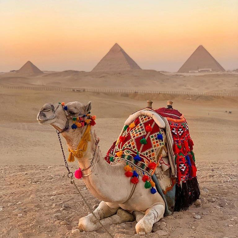 How to enjoy Giza day tours during your vacation?