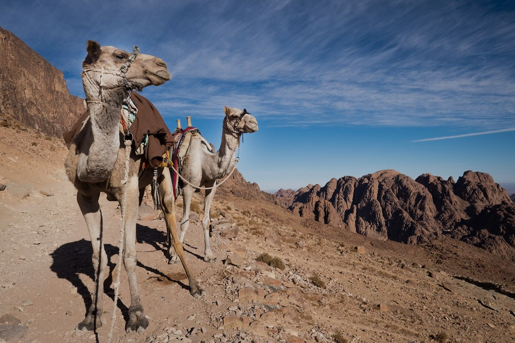St Catherine Monastery And Mount Sinai Night Tour From Sharm-ELSheikh Bus