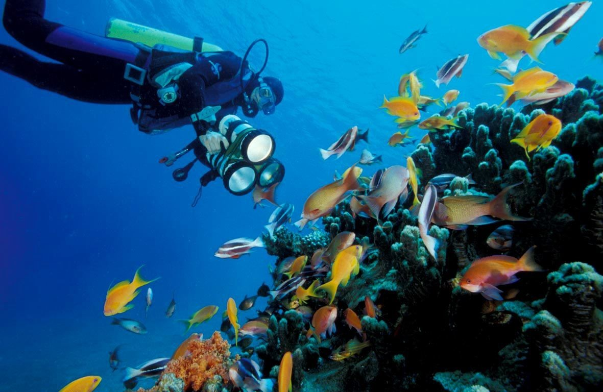 Snorkeling Tours In AqabaI