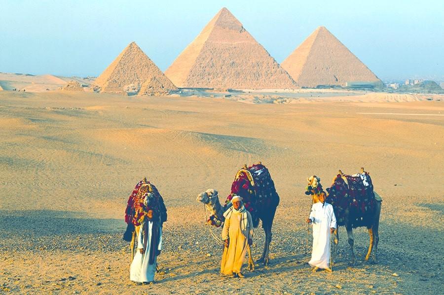 Camels at Giza Pyramids