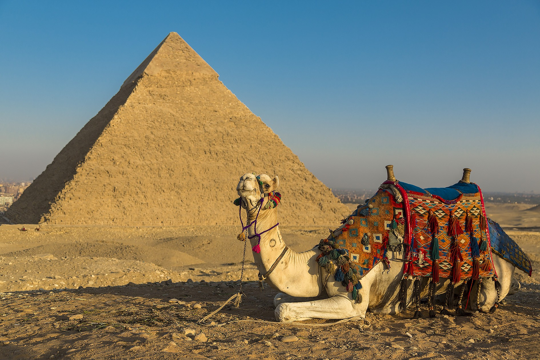 Giza_Pyramids_with_camel.jpg