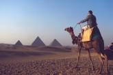 camel front of giza pyramids