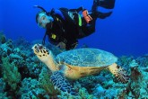 diving at red sea