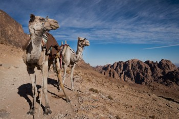 St Catherine Monastery and Mount Sinai Night Tour from Sharm el Sheikh bus