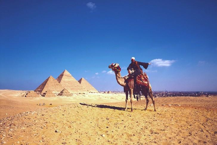 Camel at Giza Pyramids