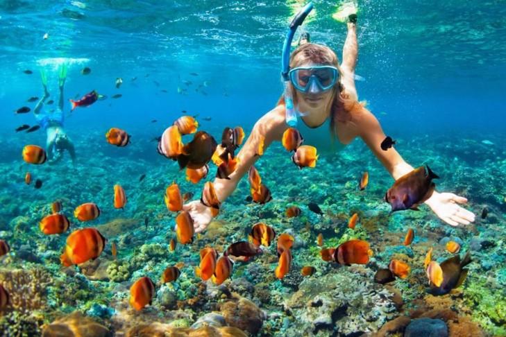 snorkeling in ras mohamed