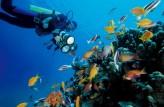 Snorkeling Tours In Aqaba Jordan